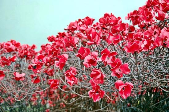 Poppies 13